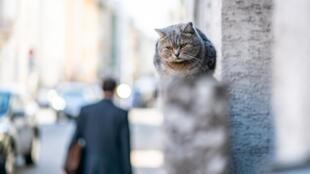 Ежегодно во Франции сто тысяч домашних питомцев оставляют на улицах