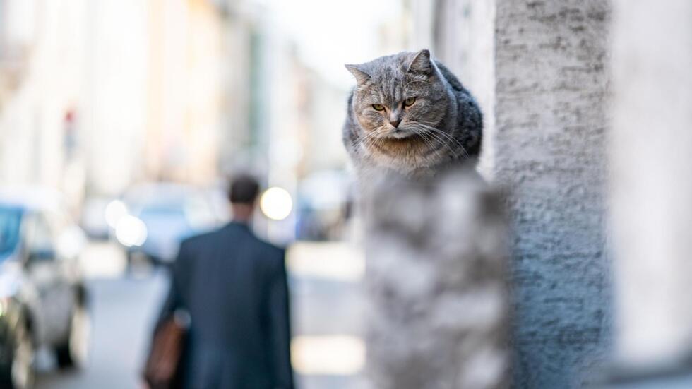 коронавирус у уличных кошек