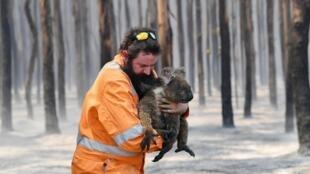 Пожарный спасает коалу на австралийском острове Кенгуру, 7 января 2020 г.