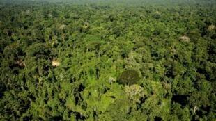 Reserva florestal Amazônica de Trairão, no estado do Pará.