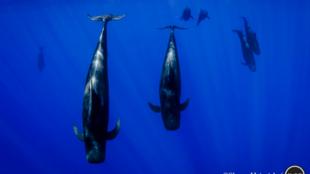 """""""De dos bocanadas de aire que respiramos, una viene de Alta Mar"""", afirma el ambientalista Rémy Parmentier."""
