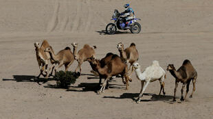 Rally Dakar en Arabia Saudita: el piloto argentino Mauricio Javier Gómez desafía a los locales.