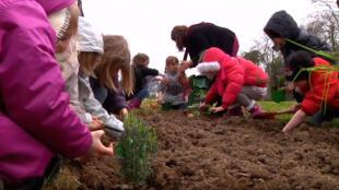 Hortas serão estendidas da escola primária para colégios e liceus.