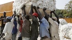 Récolte du coton au Burkina Faso, l'une des principales ressources économiques du pays.