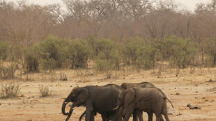 Elephants in Hwange National Park in Zimbabwe.