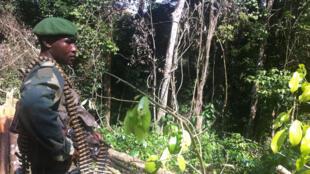 Un soldat congolais dans le triangle de la mort, en RDC, où sévissent les rebelles ADF.