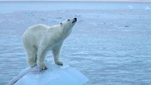 气候升温北极也难幸免