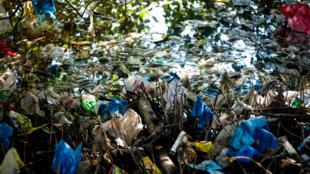 Composés principalement de sacs en plastique, les déchets de Manille se retrouvent dans les zones humides.