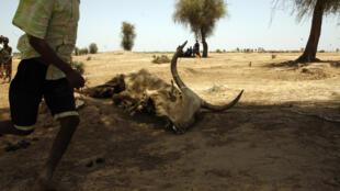 Un village affecté par la sécheresse au nord du Sénégal, en 2012.