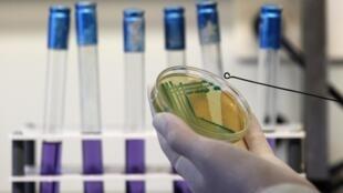 As autoridades sanitárias holandesas confirmam que foi descoberta no país uma variante da bactéria E.coli (EHEC)