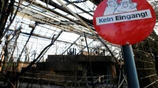 В новогоднюю ночь в зоопарке Крефельда в Германии сгорел обезьянник, погибли более 30 животных