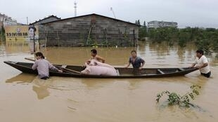 Farmers carrying their pigs at a flooded area of Zhejiang province