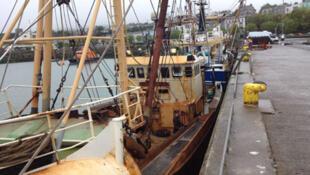 Bateaux de pêche dans le port de Howth, en Irlande.