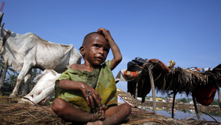 Two-year-old Nihar Bibi sits on ground along with livestock after fleeing from flood water with her family in Sukkur