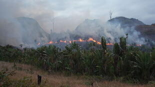 Illegal slash and burn in the region of  Manantenina in Madagascar.