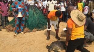 Des éco-gardes relâchent une tortue, elle sera protégée par le vodoun Zangbéto. Le Bénin a signé les textes protégeant ses espèces marines. Mais les pêcheurs continuent de les attraper.