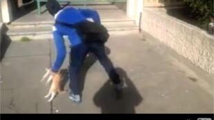 Vídeo do rapaz atirando o gato contra uma parede provocou indignação na internet.