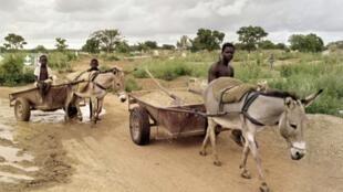 Yadda ake amfani da jakuna a yankunan Sahel