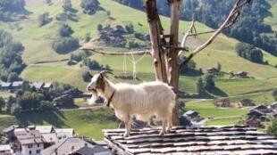 Альпы хороши идля летних каникул, идля зимнего отпуска.