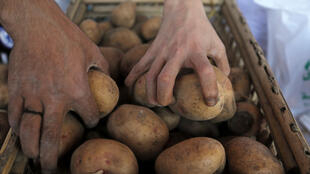 Вавиловская биостанция под Лионом восстанавливает утраченные во Франции, но сохранившихся в Институте Вавилова сорта овощей и фруктов