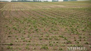 La agricultura intensiva produce gases de efecto invernadero, aseguran los científicos del IPCC.