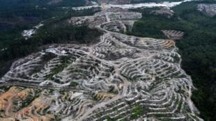 Rừng nhiệt đới tại đảo Kalimantan (Borneo), Indonesia bị phá dần nhường đất cho ngành công nghiệp khai thác cọ.