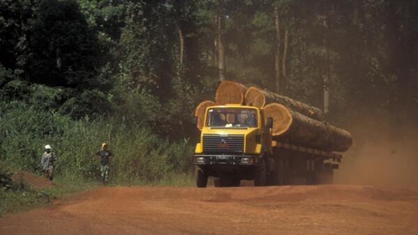 Un camion transportant du bois en direction de Douala destiné à l'exportation.
