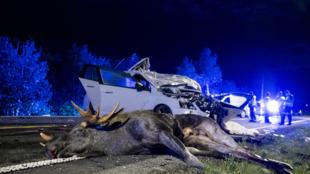 Selon l'assureur Allianz, les accidents impliquant les transports et les animaux sont en hausse.