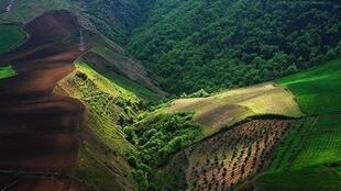 جنگلهای هیرکانی- بزرگترین لکه درختان سرخدار