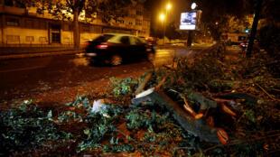Árvores arrancadas pela tempestade Leslie em Portugal, a 14 de outubro de 2018.