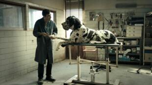 Still from 'Dogman' Italian director Matteo Garrone's film in the 2018 Cannes International Film Festival al competition
