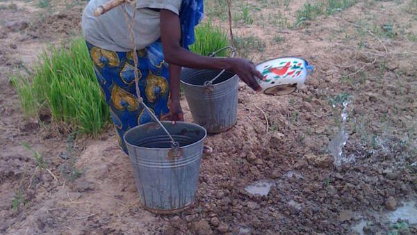 Irrigation artisanale dans le jardin des femmes du village de Banibangou au Niger