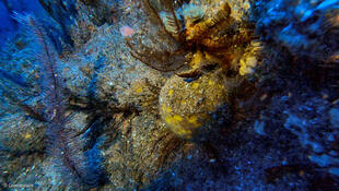 Essas estruturas recifais localizadas nas águas da Guiana Francesa, em expedição científica promovida pelo Greenpeace.