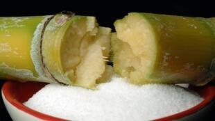 No Brasil, o cultivo comercial da cana-de-açúcar está relacionado ao desenvolvimento econômico.