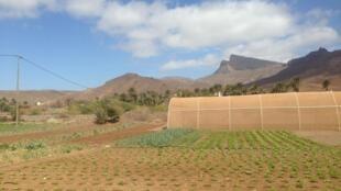 Sistema de irrigação gota a gota na ilha cabo-verdiana de São Vicente