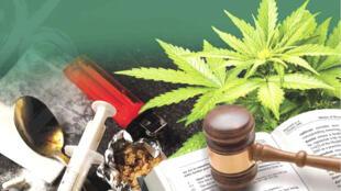 Drogas tradicionais declinam na preferência dos usuários, enquanto as sintéticas ganham espaço