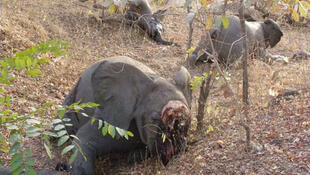 Le parc national de Bouba Ndjida, d'une superficie de 220000 ha, est le plus grand du pays mais aussi le plus isolé, ce qui facilite les massacres d'éléphanteaux.