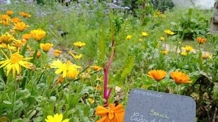 Vườn rau sạch trong công viên Kellermann (Paris quận 13) có trồng rau thơm và thảo dược