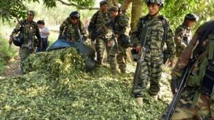 Le gouvernement péruvien a annoncé avoir atteint son objectif d'éradication de plantations de feuilles de coca. Ici, les soldats participent à une opération visant à détruire des plantations dans le Vraem. (photo d'illustration)