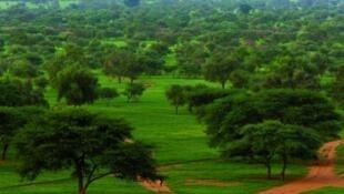 Shirin Katange wasu kasashen Sahara da Sahel da itace da ake kira Great Green Wall