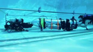 Илон Маск предлагает эвакуировать детей из пещеры в Таиланде с помощью микросубмарины