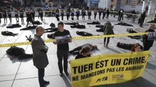 Активисты проводят публичные акции против жестокого обращения с животными