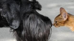 Ветеринары просят перестать «дезинфицировать» домашних животных