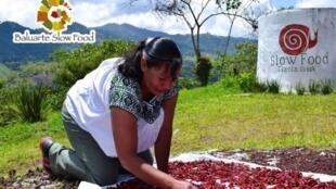 Chile Serrano, producto 'Baluarte' de Slow Food.