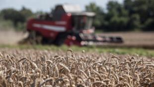 [Image d'illustration] Les cours du blé sont en nette hausse en cette fin d'année notamment suite à l'accord commercial qui devrait voir le jour prochainement entre les États-Unis et la Chine.