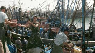 Fishermen work in the port of Laayoune, Western Sahara, the world's largest sardine port