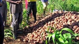 Abertura oficial do ano agrícola 2017/2018 em Angola.