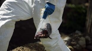 forensic officer holds a plastic bag containing flesh gathered from the site of a suicide bomb blast