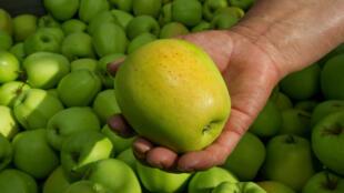 La manzana del Limousin.