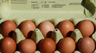 Vários milhões de ovos contaminados na Europa.